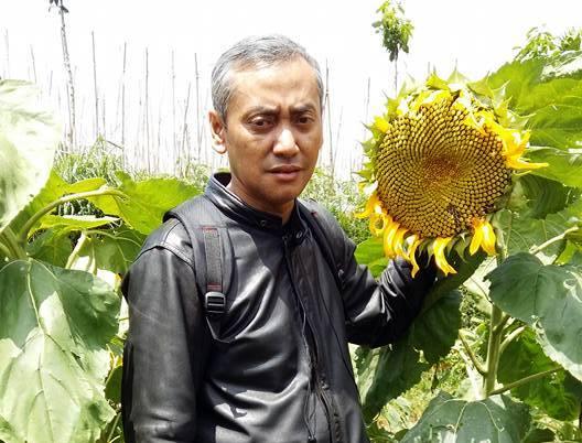 basuki bunga matahari