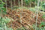 tanah tertutup pertanian odesa indonesia