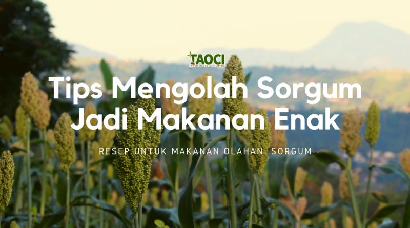 Tips-mengolah-sorgum-jadi-makanan-enak-odesaindonesia