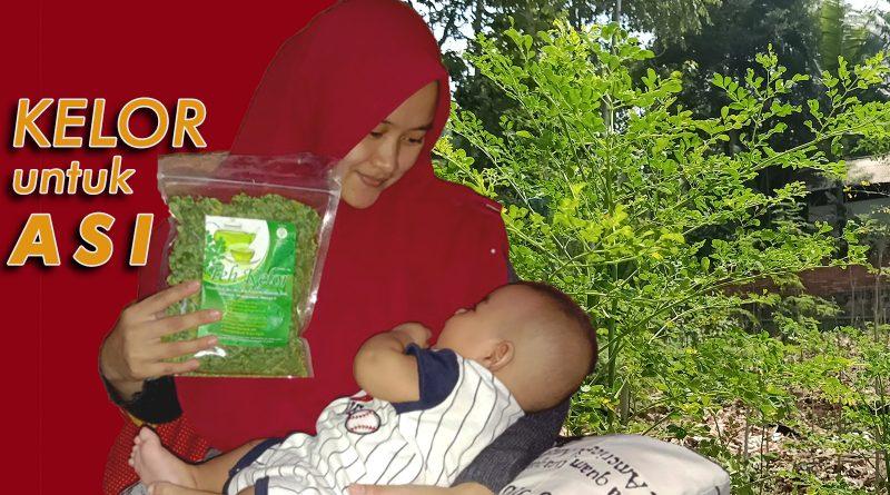 Manfaat Kelor untuk Ibu Hamil dan Menyusui