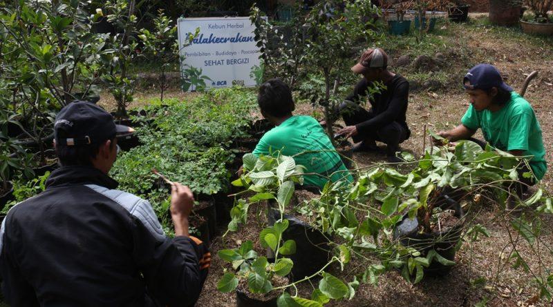 Berkebun Herbal di Rumah Makan Balakecrakan Punclut Bandung