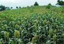 Agar Pertanian Bisa Mengatasi Kemiskinan dan Krisis Lingkungan
