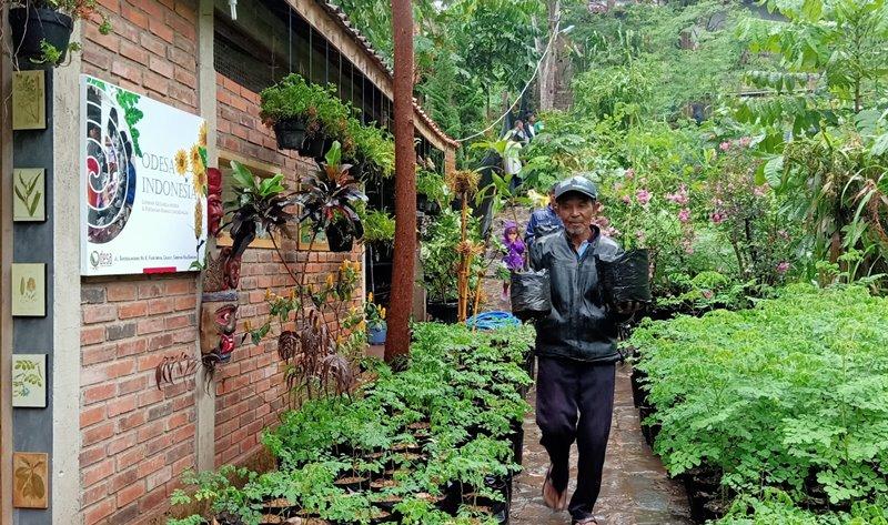 pendidikan pertanian odesa samin