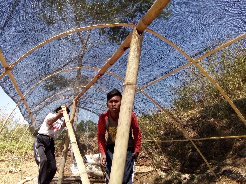 tardi petani cimenyan odesa indonesia bandung herbal