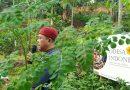 Kerja Kebudayaan Berbasis Budidaya Botani Bergizi