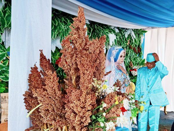 kawinan sorgum dekorasi tanaman pangan perdesaan bandung utara e1580315261339