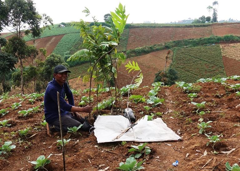 Aksi tanam Petani Cimenyan Kawasan bandung Utara odesa indonesia bandung pertanian agroforestri
