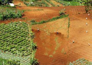 Pertanian Monokulture sayuran Cimenyan Peb 2020 e1598950978421