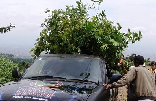 Bibit agroforestry