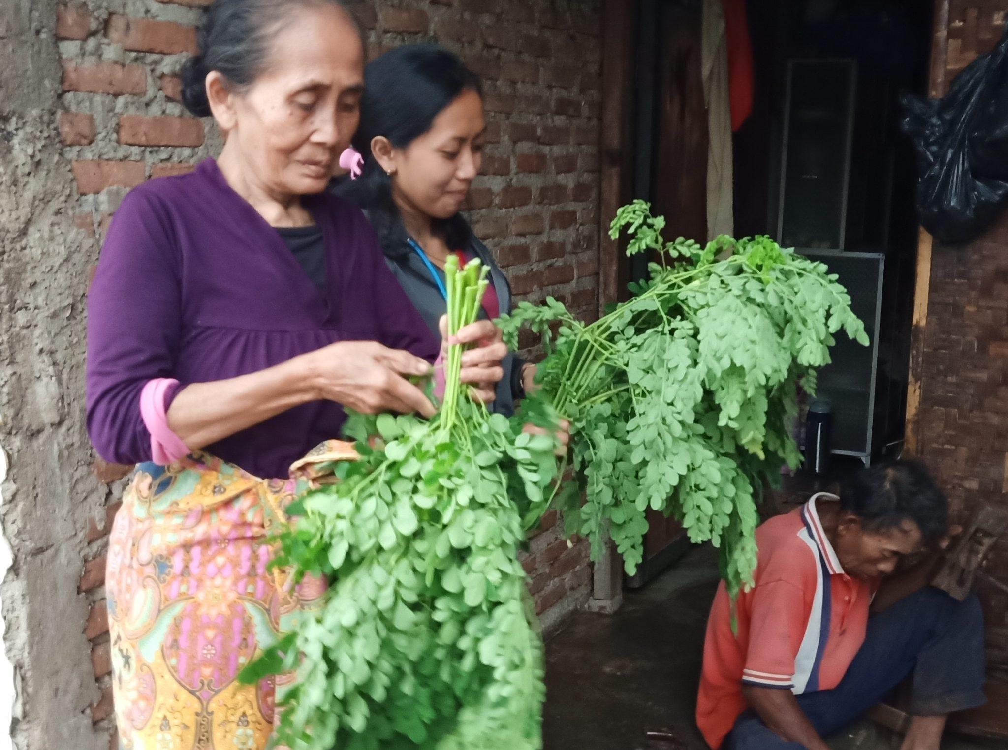 masakan sayur gizi kelor odesa indonesia bandung