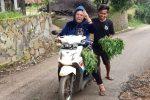 panen memetik kelor moringa odesa indonesia