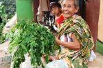 sayyur kelor nenek cisanggarung bandung odesa indonesia