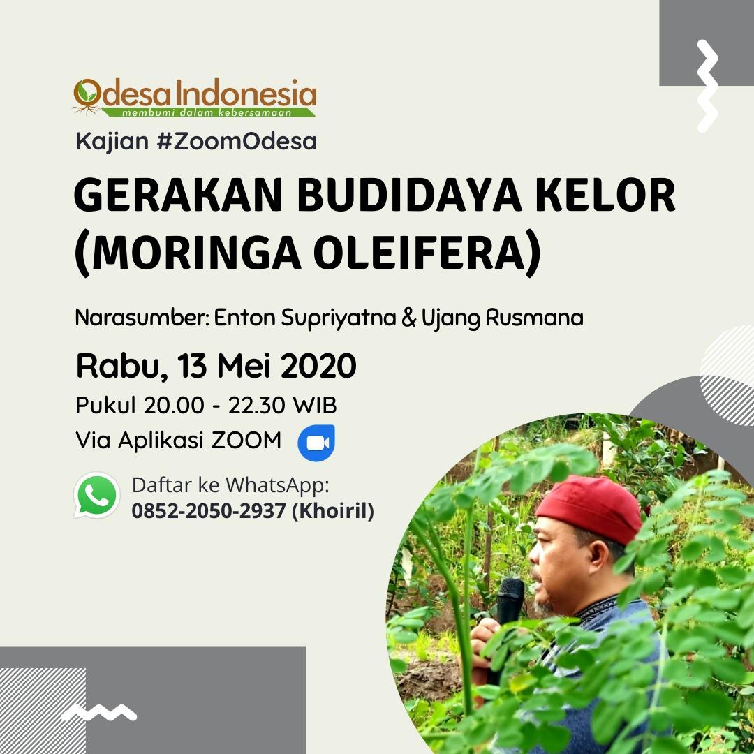 kelor manfaat cara budidaya kelor moringa oleifera
