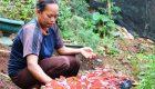 Nengsih, Sebuah Cerita Hidup Keluarga Pra-Sejahtera