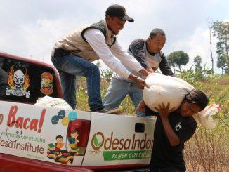 odesa indonesia panen hanjeli kelor sorgum agroekologi